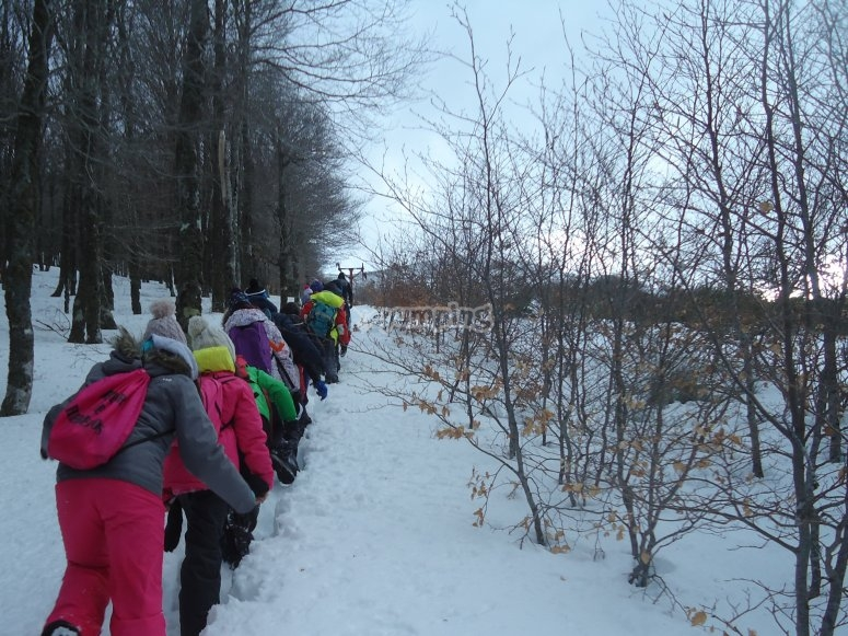 Gruppo racchette da neve