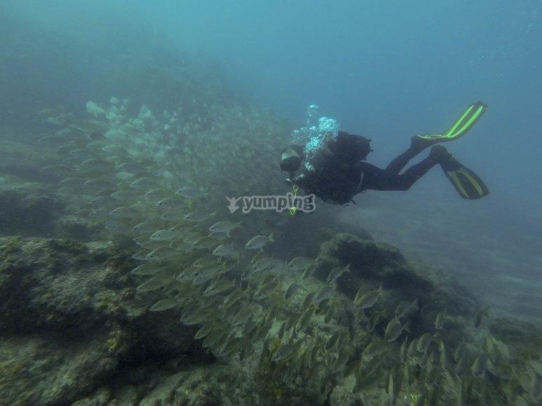 Diving among fish