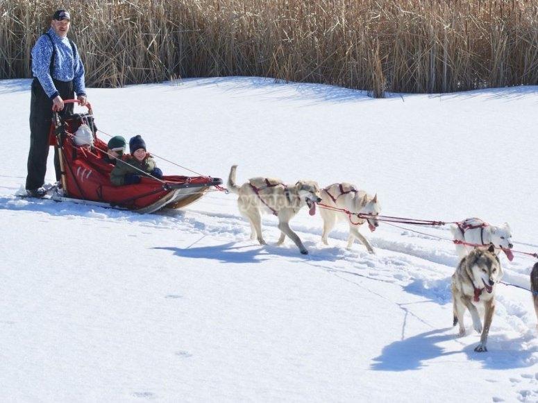走在狗拉雪橇的peques