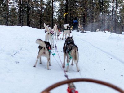 Fai mushing in Andorra per 3 km
