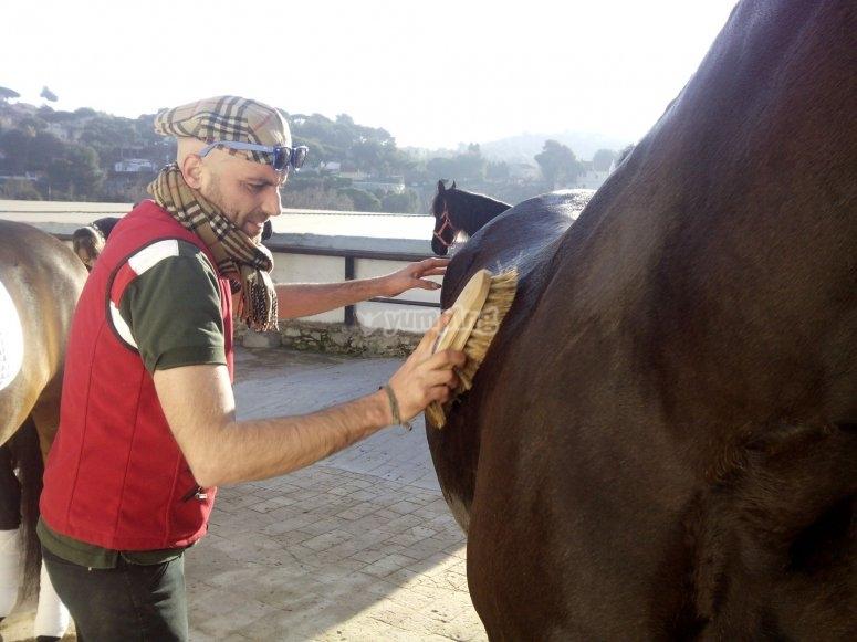 Jinete cepillando caballo
