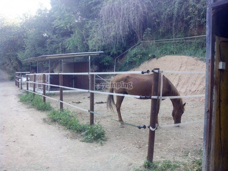 Zona de descanso de los caballos
