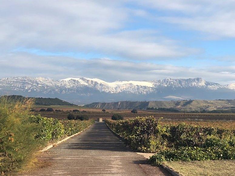 Riojana酒庄的景色