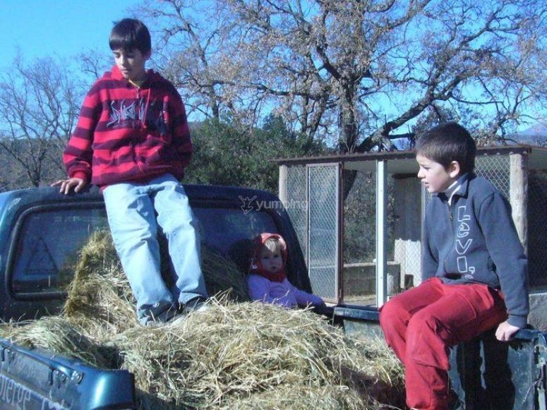 Actividades de granja