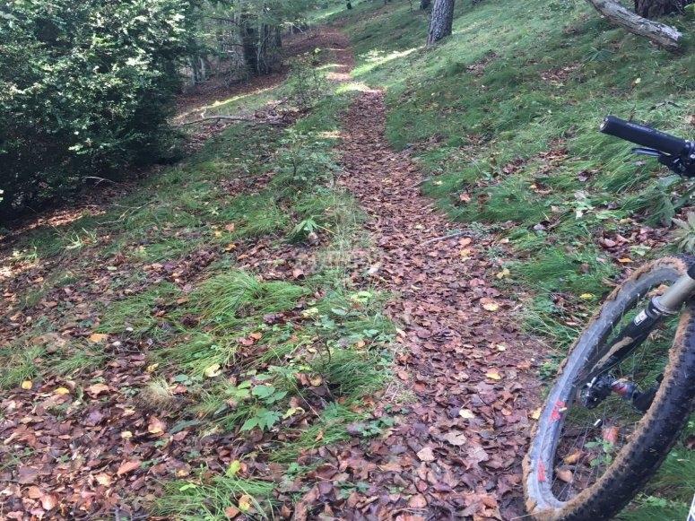 沿着森林步道骑自行车