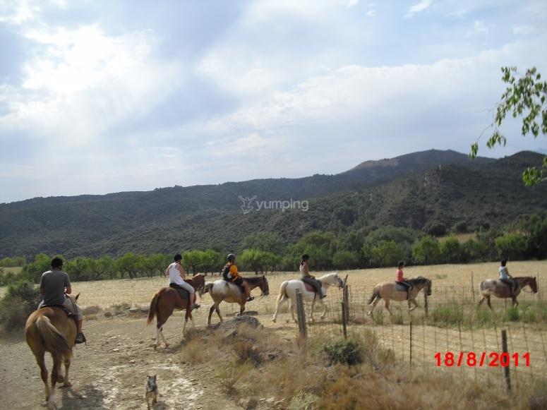 连续骑马--999-马匹Bierge