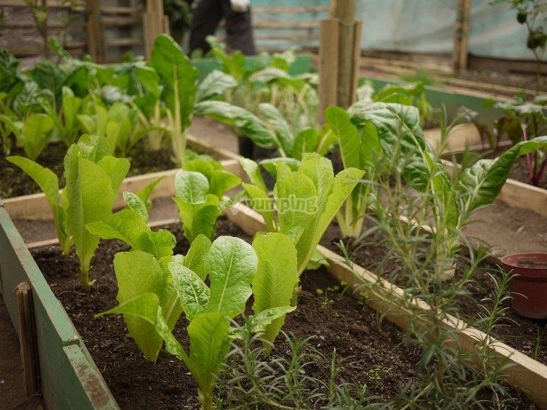 Talleres de cultivo