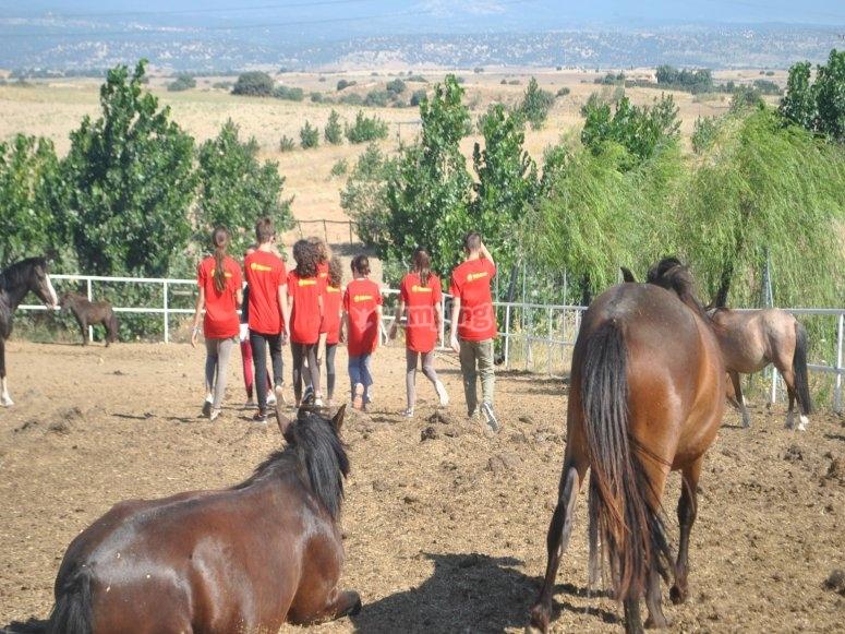 clase de equitacion en el campamento