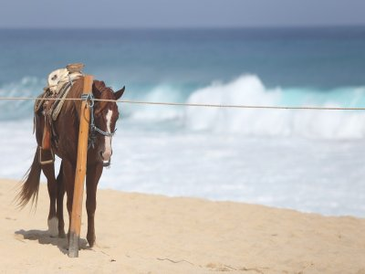 Ride a horse in the sea with Spa in Gandía