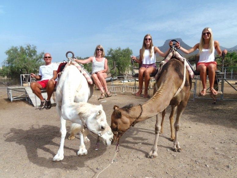Family trip riding a camel