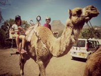 Camel ride for children in Tenerife 40 min