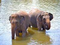 Si te gustan los elefantes es tu sitio