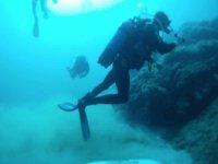 contemplando los corales