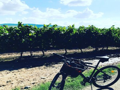 Bike route around winery and accommod. in La Rioja