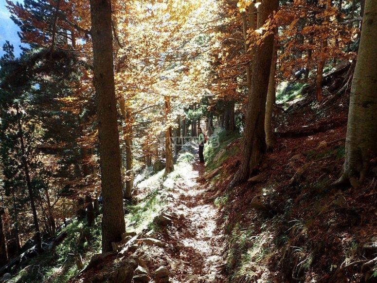 Ruta en Navacerrada
