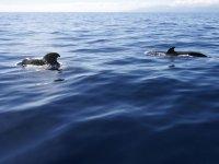 Cetaceos acercandose al barco