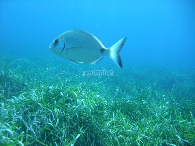 Peces durante la inmersión