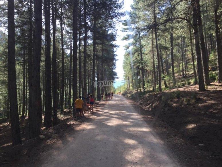 Strada tra i pini