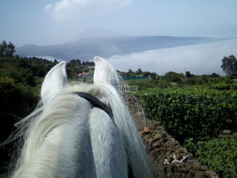 Recorrido a caballo en Tenerife