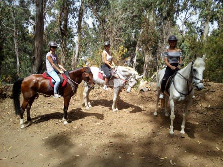 Grupo a caballo por Tenerife