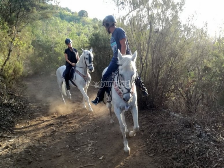 Come to ride a horse in Tenerife