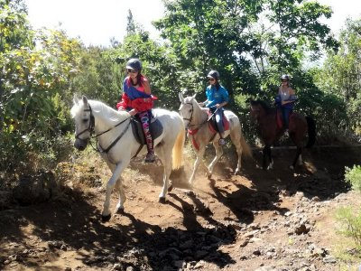 Horse Riding 4 Hours La Orotava For Residents