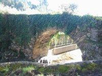 Puente cubierto por la hiedra