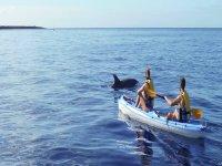 kayak con delfines