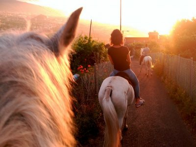 2h Horse Riding in La Orotava For Residents