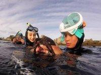 在海洋中发现章鱼