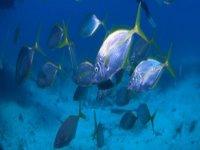 banco de peces en un fondo marino
