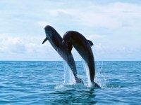 dos delfines saltando desde el agua