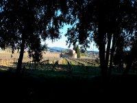 漫步在葡萄园散步引导VINA葡萄酒旅游