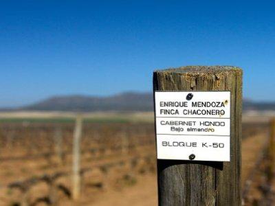 Bodegas Mendoza