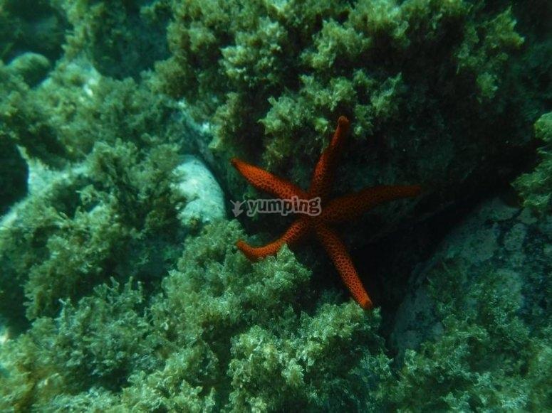 Fauna en Cabo de Gata