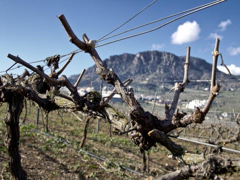Terreno para cultuviar las uvas en Alora