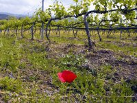 Visita a bodega, cata de vinos y aperitivo Álora