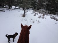 Horse and dog in the snow