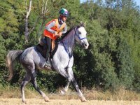 Enduro training on horseback