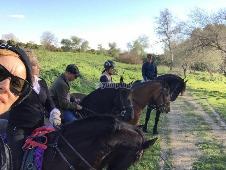 骑着马在路上停下来