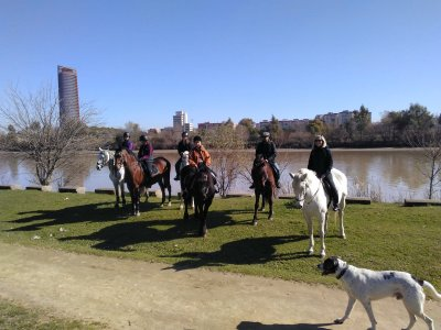 Horseback riding along the Guadalquivir River 2 h
