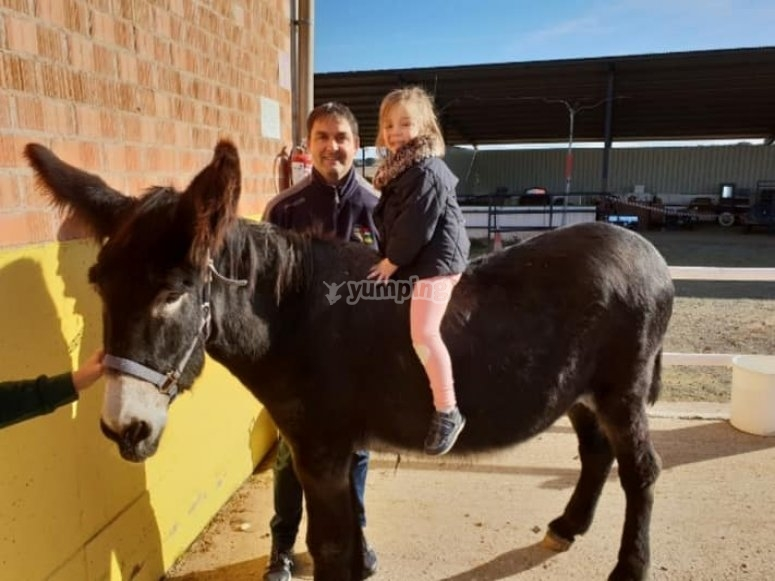 Horse riding classes for groups and suitable for everyone