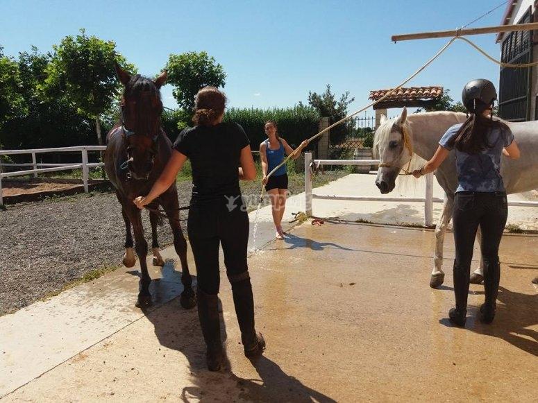 Taking care of the horses of San Torucato's farm school