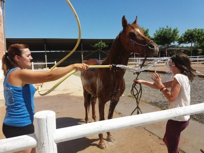 5 horse riding classes San Torcuato