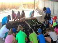 Cultivando plantas