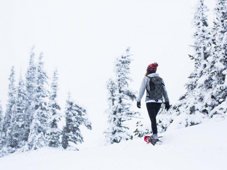 Gruppo di escursionisti con racchette da neve