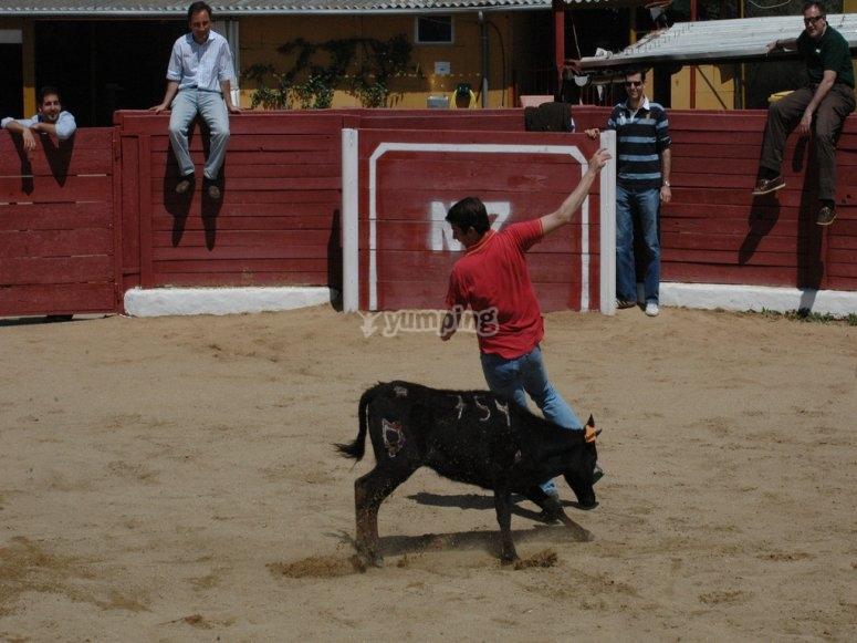 小母牛和朋友在Ciempozuelos