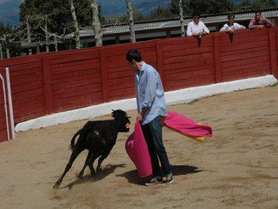 幽默黄色Capea 4小母牛Ciempozuelos