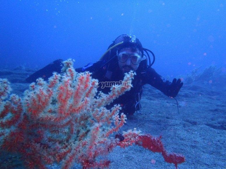 Buceador en el fondo del mar