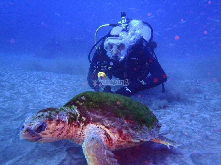 Buceando con tortuga